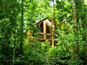 Fur'N'Feathers Rainforest Tree Houses - Goulburn Accommodation