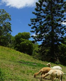 Wattle Gully Retreat - Goulburn Accommodation