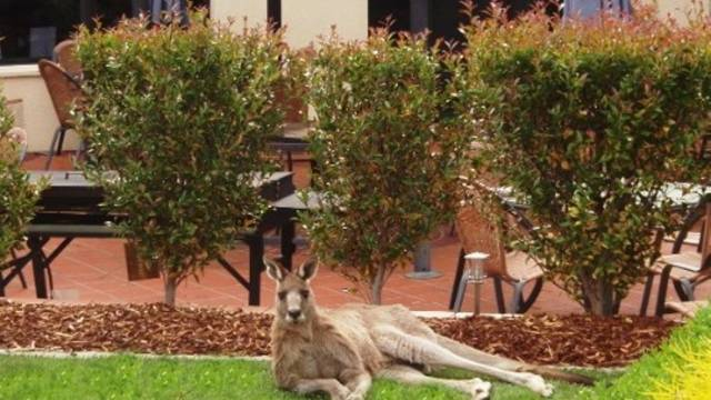 Alpha Canberra Hotel and Apartments - Goulburn Accommodation