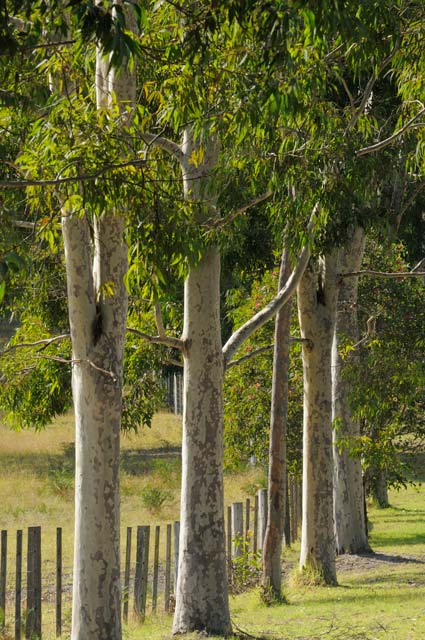 Stringybark Cottages - Goulburn Accommodation