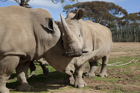 Monarto Zoo - Goulburn Accommodation