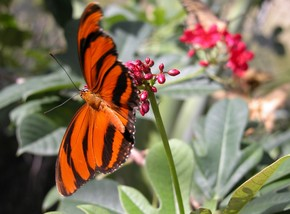 Butterfly Farm - Goulburn Accommodation