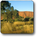 Uluru - Kata Tjuta National Park - Goulburn Accommodation