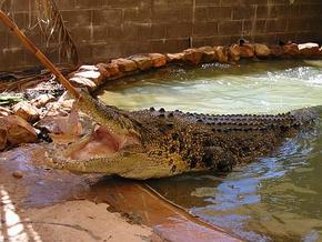 Wyndham Zoological Gardens and Crocodile Park - Goulburn Accommodation