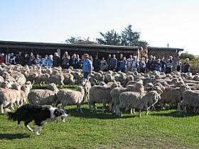 Curringa Farm - Accommodation and Farm Tours - Goulburn Accommodation