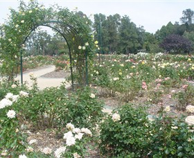 Victoria Park Rose Garden - Goulburn Accommodation