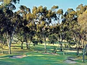 Tanunda Pines Golf Club - Goulburn Accommodation