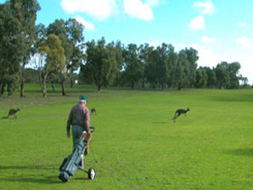 Coffin Bay Golf Club - Goulburn Accommodation