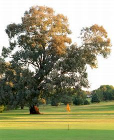 Cowra Golf Club - Goulburn Accommodation