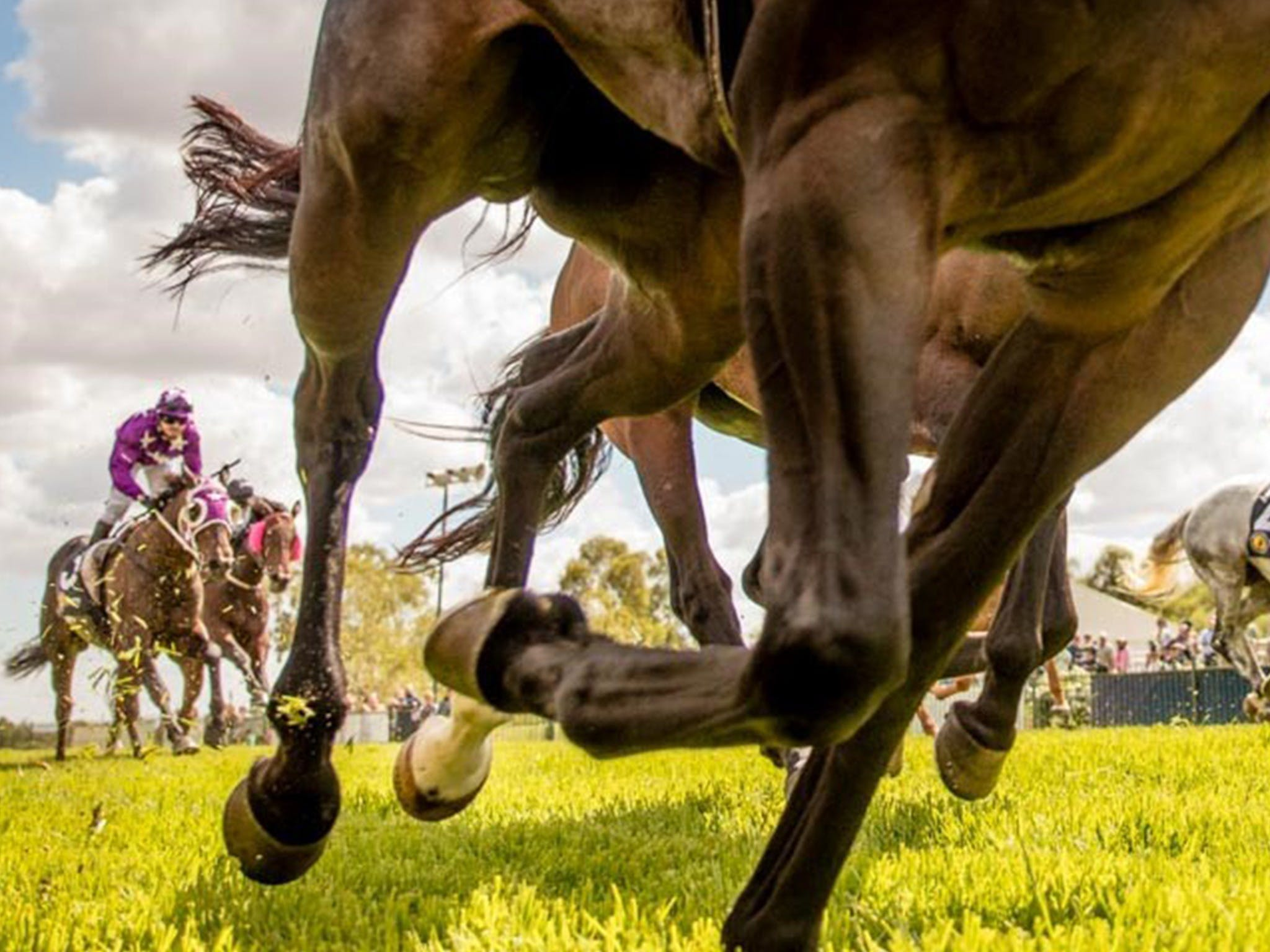 Night Markets and Race Day - Goulburn Accommodation